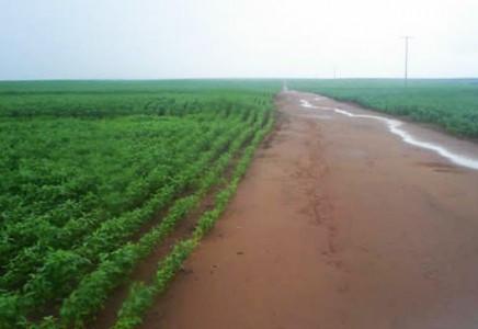 Farm-for-Sale-in-Campo-Novo-dos-Parecis-Mato-Grosso-Brazil