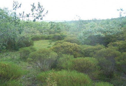 Fruit-Tree-and-Nut-Farm-for-Sale-in-Bahia-Brazil