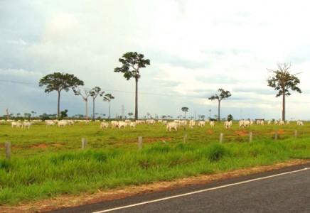 Livestock-Farm-for-Sale-in-Acre-Brazil