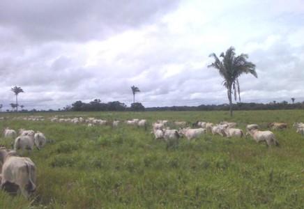 Livestock-Farm-for-Sale-in-Maranhao-Brazil