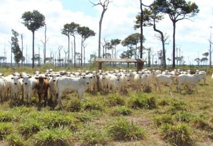 Livestock-Farm-for-Sale-in-Mato-Grosso-Brazil